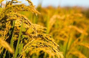 功能性肥料在未来的发展中有何优势?
